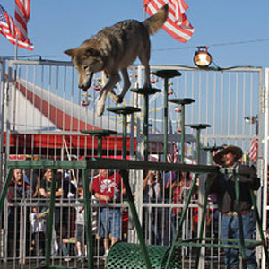 The Sandlofer family will present Wolves of the World at the Allen County Fair, which features wolves doing amazing tricks.